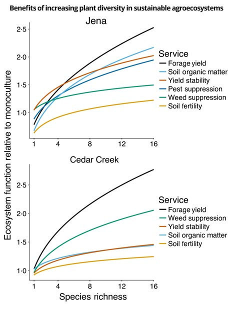 Benefits of increasing plant diversity in sustainable agroecosystems