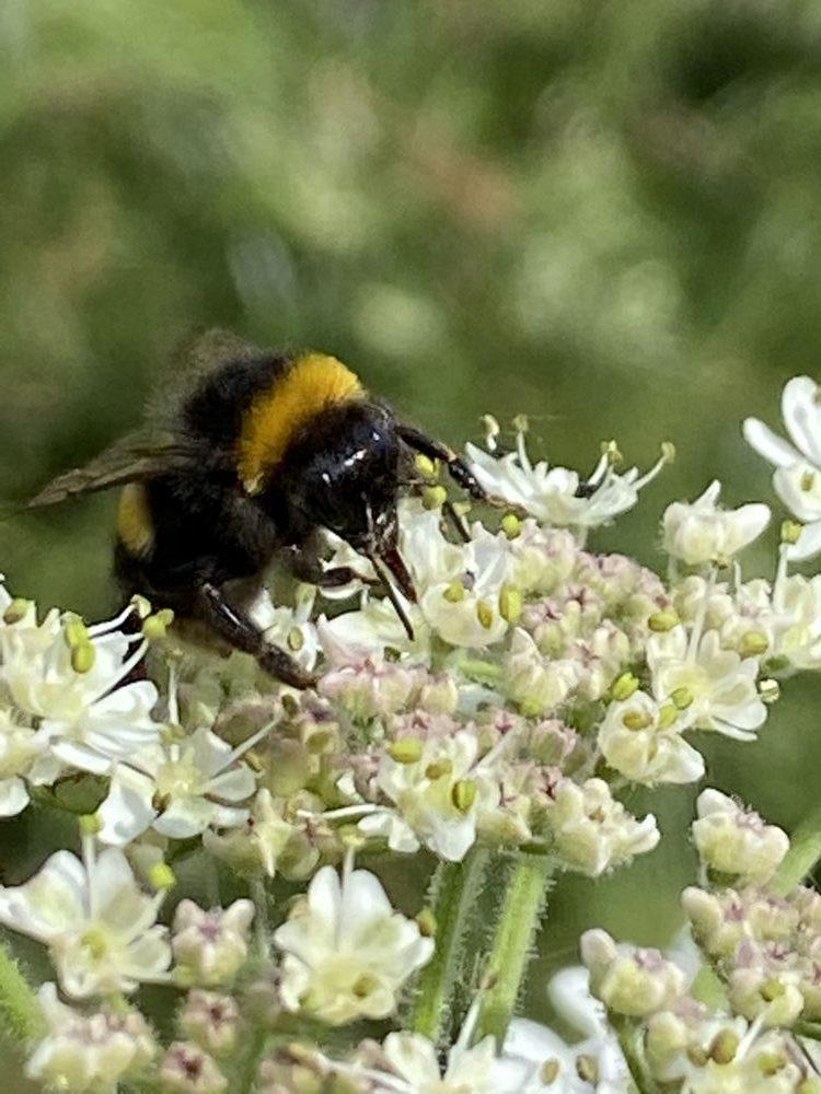 Wild Flower Meadows Beekeeping