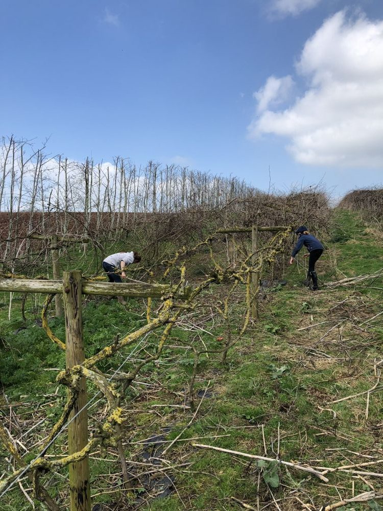 Townsend Farm Vineyard