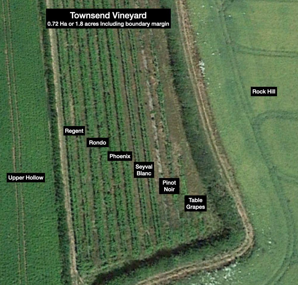 Townsend vineyard plan