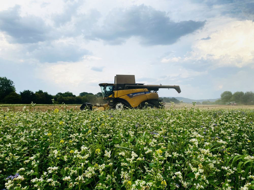 Combine Harvester Cover Crops
