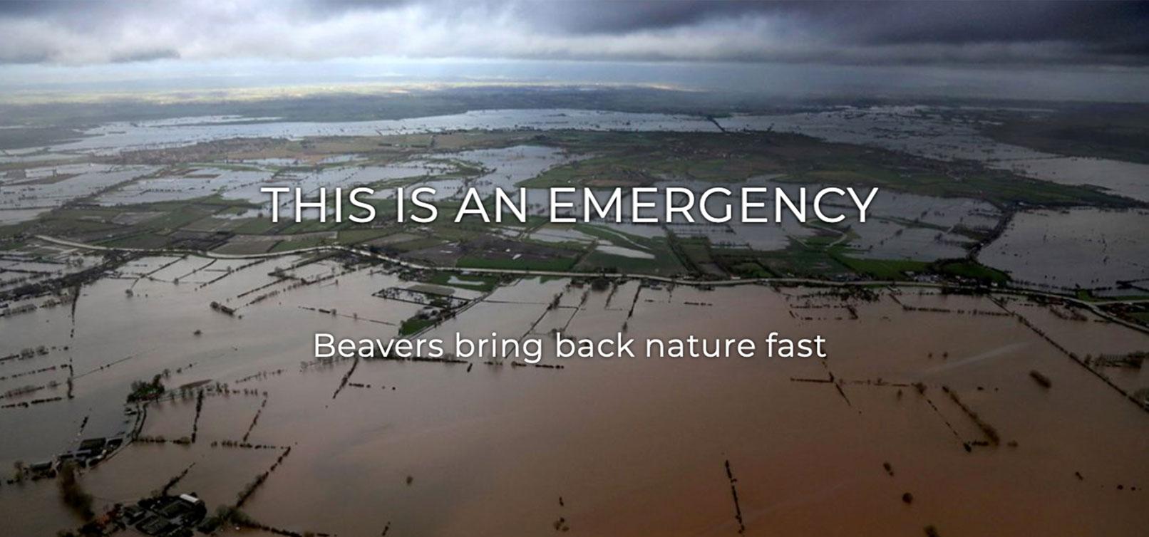 Beavers bring back nature fast