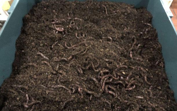 Vermiculture Worm Farm